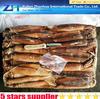 best whole frozen illex squid,frozen squid fishing bait