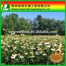Factory supply Echinacea purpurea extract, 4% polyphenols echinacea extract, 4% chicoric acid echinacea purpurea extract