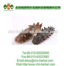 Sea cucumber extract softgels