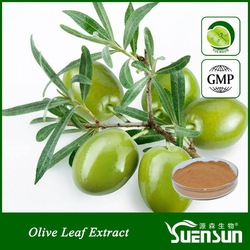 GMP factory supply organic olive extract oleuropein pure olive leaf powder