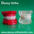 Azul/transperent/dental de color modelo de estudio de los materiales dentales