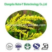 GMP Manufacturer Supply Golden Rod P.E./Solidago Virgaurea Extract/Golden Rod Extract