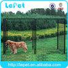 large outdoor professional dog anti bark training