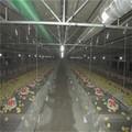 التلقائي تصميم منزل مزرعة دواجن الدجاج اللاحم