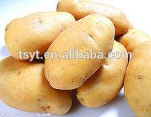 Fresco holanda papa / amarillo de la patata en frío tienda 2014