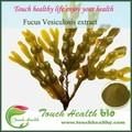 Fucusvesiculosusสารสกัดจากธรรมชาติ, fucusvesiculosusสารสกัด0.15%ไอโอดีน, fucusvesiculosusผง