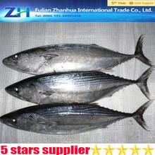 frozen skipjack tuna whole round ,skipjack tuna price.skipjack tuna export supplier.