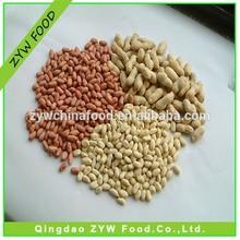 New Corp Chinese Peanut Price Peanut Kernel