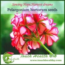 Pelargonium hortorum seeds,geranium flower seeds on sale