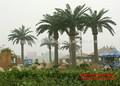 Sjh14112919 palmeira de plástico artificial data palmeira todos os tipos de palmeiras