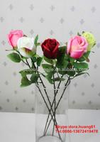 SJH112942 single rose flower flowers roses holland roses