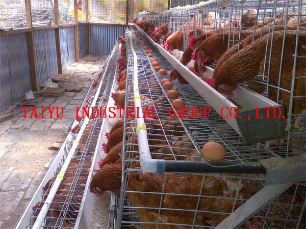 Poultry Farming in Kenya-layers Taiyu Kenya Layer Farm Poultry