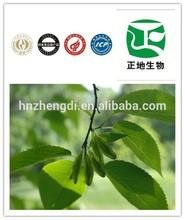 Hot organic eucommia bark extract powder