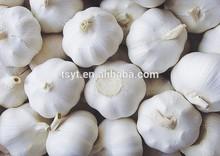 2014 Crop Fresh Garlic, Fresh White Garlic Hot Sale