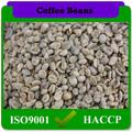 üst sınıf yeşil Arabica kahve çekirdeği fiyatları promosyon