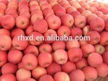 2014 sweet qinguan apple for sale