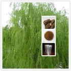 Top Quality 100% natural 50% salicin white willow extract