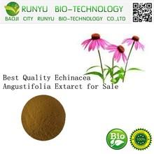 Hot Sale Echinacea Purpurea Powder,Echinacea Purpurea Extract,Echinacea Extract