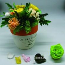 popular pot flowers with orange ceramic