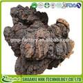 Organico fungo chaga estratto/fungo chaga estratto in polvere/obliquo inonotus in polvere
