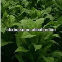 free sample high quality tobacco leaf extract solanesol
