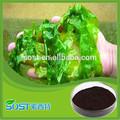 Novos produtos extrato de algas marrons em pó