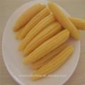 los nombres de vegetales enlatados bebé de maíz
