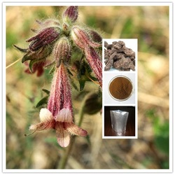 Hot selling Top Quality 10:1 rehmannia glutinosa root extract