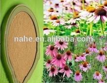 Anti-infective antiviral 100% natural echinacea purpurea extract , cichoric acid powder echinacea extract in bulk