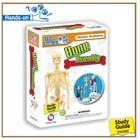 human skeleton model diy science toy