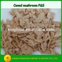 Good taste canned mushroom pieces stems wholesale