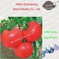 de color rosa híbrido semillasdetomate caliente de la venta