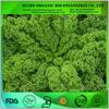 organic kale powder / organic kale extract powder