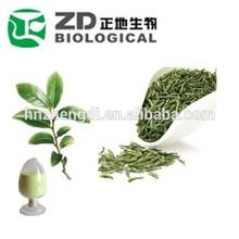 antibacterial good powder plant extract green tea extract