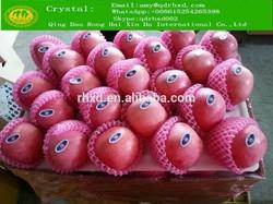 Fresh Apples 2014 fuji apple/2014 Red fuji apple