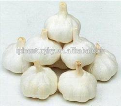 Low price natural garlic from China