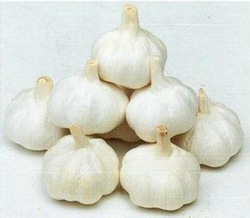 Low price natural garlic from China