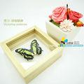 Fousen( 011 serviço de processamento) 13*13*4.5cm natural emoldurado em madeira decoração da borboleta