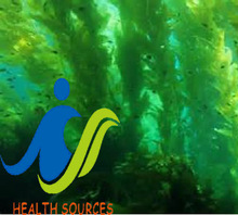 Kelp have been celebrated for centuries due to its proven ability to prolong life and enhance health and beauty