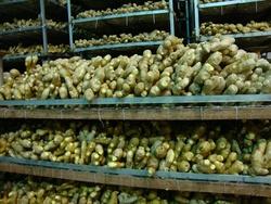 2014 fresh ginger buyer of dry ginger