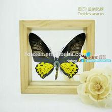FOUSEN(011) Nature& Art natural species Gift & Merchandise