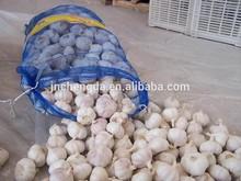 natural fresh white garlic