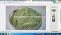 perfekte marine Phytoplankton pulverschüttung
