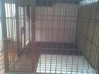 dog cage welded wire mesh roll(anping manufacture)