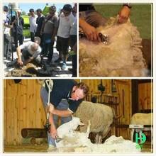 Lana de cortar el pelo eléctricas máquina de lana de oveja venta