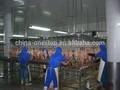 L'abattage halal poulets musulman. oiseaux. abattoir d'équipement de traitement en ligne