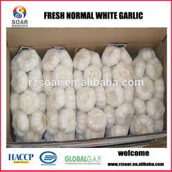 Chinese wholesale garlic