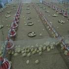 broiler poultry shed design