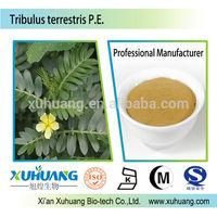 Sex long time enhancer Pure Natural Powder form Tribulus terrestris extract