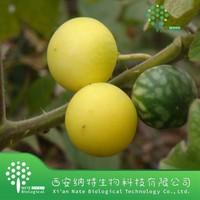 100% Natural Belladonna Extract / Belladonna herb Extract